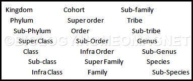 Taxonomy 1