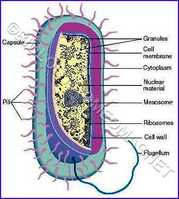 Different parts of Bacteria