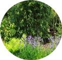Permalink to: Botany