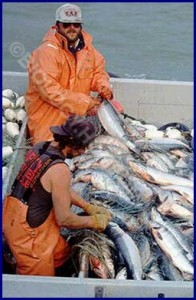 Fishery as a job