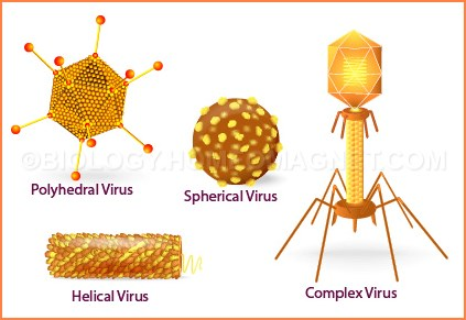 Virus of different shape