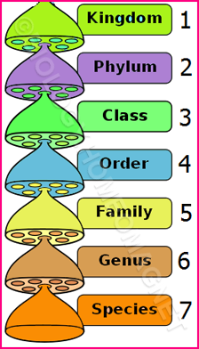 Biological classification – Biology for Everybody