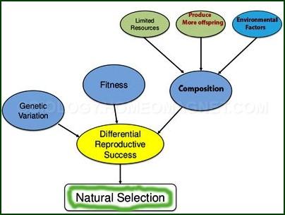 natural-selection a