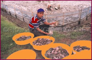 Brackish Water Prawn Culture