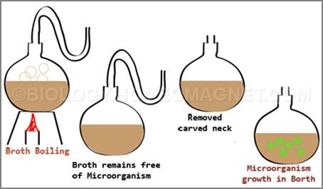 Pasteur's Experiments